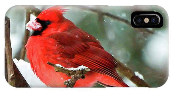 Winter Red Bird - Male Northern Cardinal With A Snow Beak IPhone Case