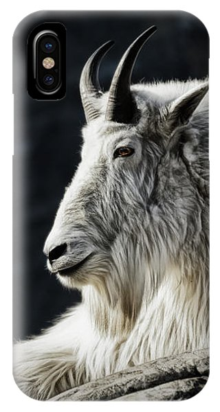IPhone Case featuring the photograph Wisdom From Up High by Brad Allen Fine Art