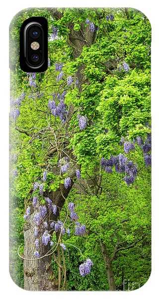 Deciduous iPhone Case - Wisteria And Oak by Tim Gainey