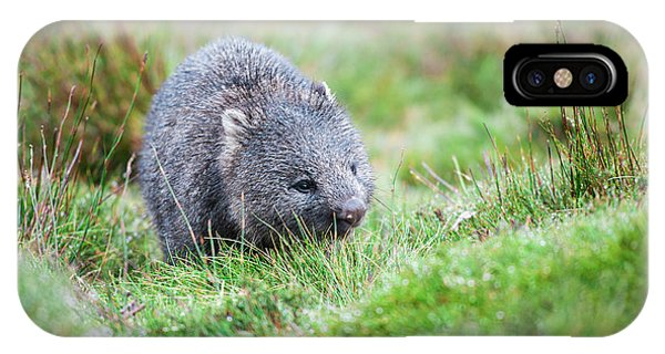IPhone Case featuring the photograph Wombat Outside During The Day. by Rob D Imagery