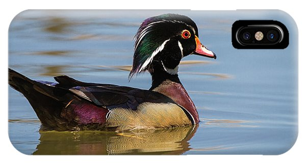 Wood Duck In Dallas IPhone Case