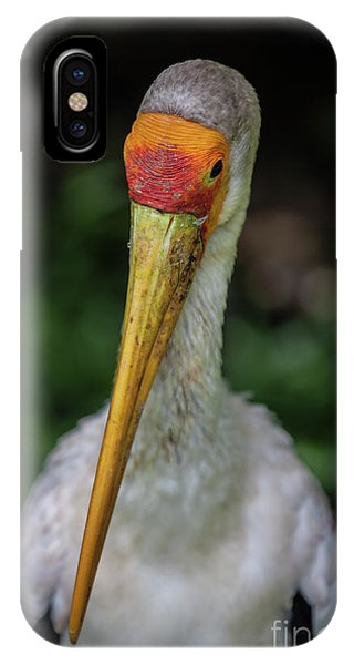 Yellow Billed Storks IPhone Case