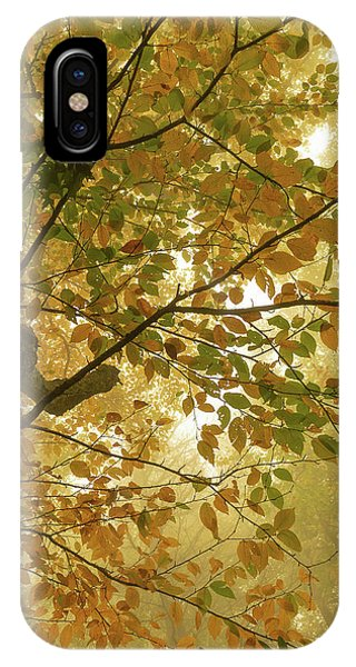 Yellow Fall Leaves - Blue Ridge Parkway IPhone Case
