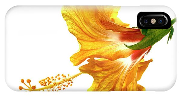 Stamen iPhone Case - Yellow Hibiscus by Christopher Johnson