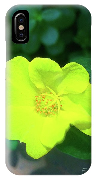 Yellow Hypericum - St Johns Wort IPhone Case