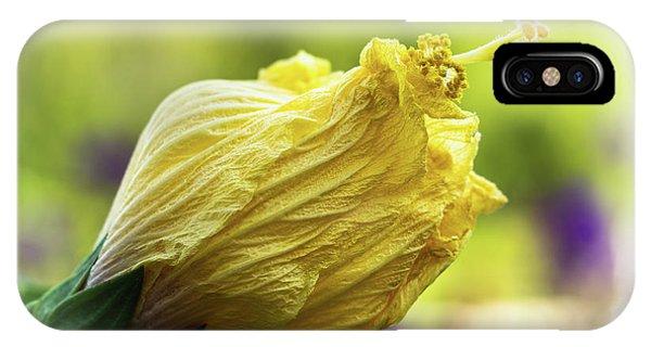 Yellow Mature Hibiscus  IPhone Case