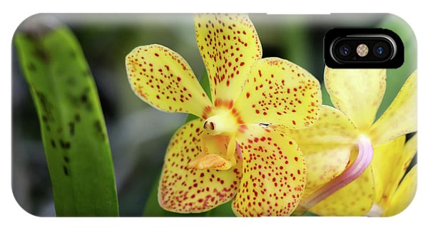 Yellow Spotted Orchids IPhone Case