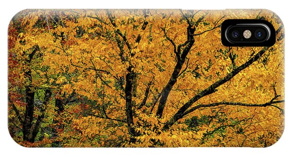 IPhone Case featuring the photograph Yellow Tree Leaf Brilliance  by Claire Turner