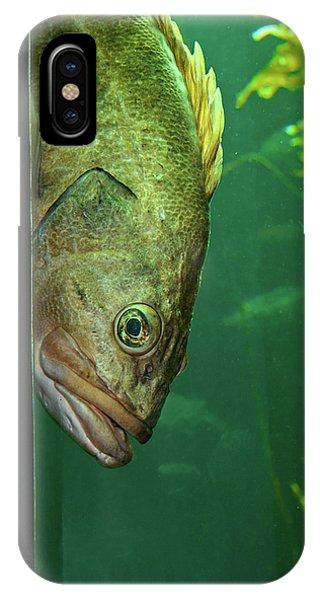 Yellowtail Rockfish Playing Peekaboo IPhone Case