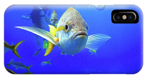 Yellowtails IPhone Case
