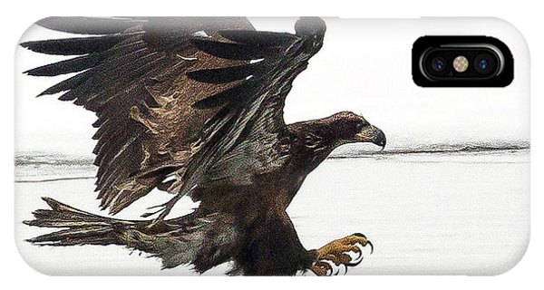 Young Bald Eagle IPhone Case