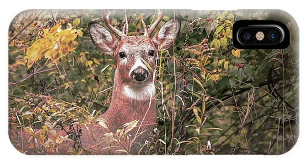 IPhone Case featuring the photograph Young Buck Portrait by Dan Sproul