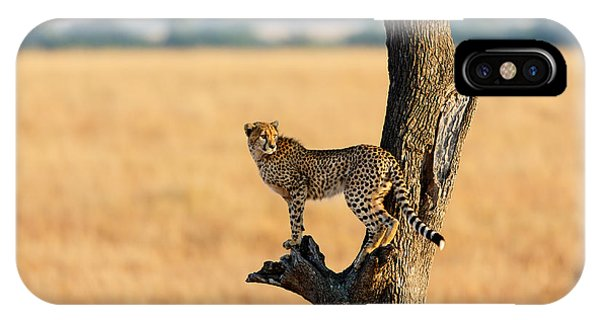 East Africa iPhone Case - Young Cheetah In The Tree In Masai by Maggy Meyer