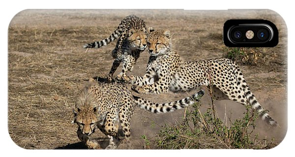 Young Cheetahs IPhone Case