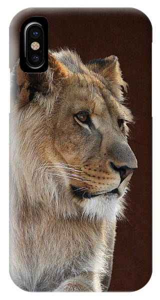 Young Male Lion Portrait IPhone Case