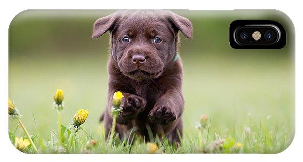 Cute iPhone Case - Young Puppy Of Brown Labrador Retriever by Bigandt.com