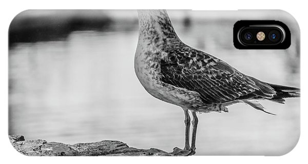 Young Seagull IPhone Case