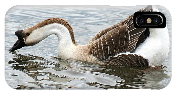 Battery D iPhone Case - Z Posed African Goose by Anita Faye
