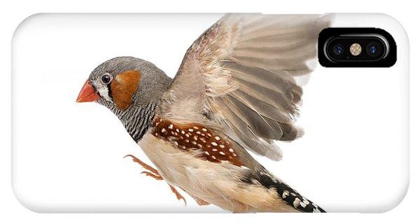 In Flight iPhone Case - Zebra Finch Flying, Taeniopygia by Eric Isselee