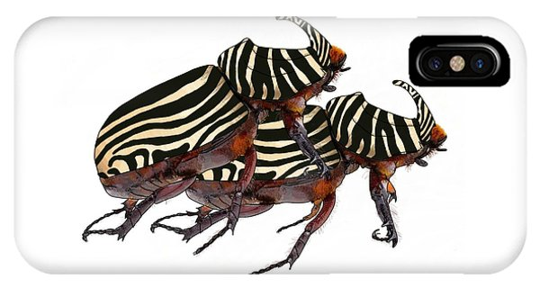 Zebra Pattern Rhinoceros Beetle 2 IPhone Case