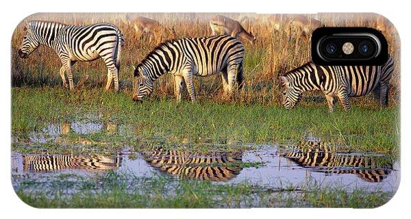 Zebras In Botswana IPhone Case