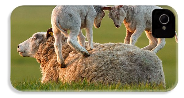 Leap Sheeping Lambs IPhone 4 / 4s Case by Roeselien Raimond