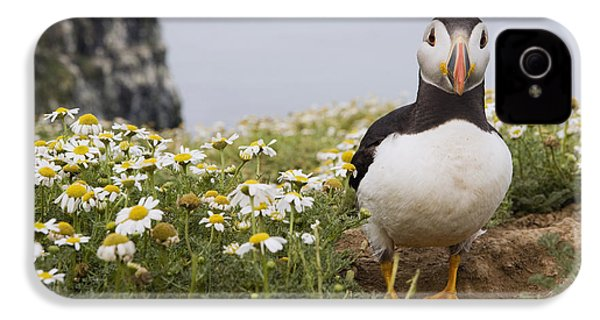 Atlantic Puffin In Breeding Plumage IPhone 4 Case