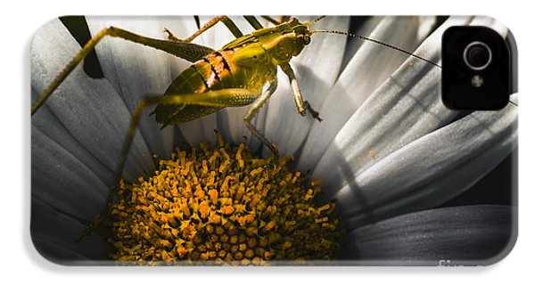 Australian Grasshopper On Flowers. Spring Concept IPhone 4 / 4s Case by Jorgo Photography - Wall Art Gallery