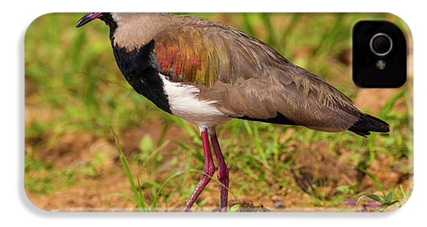 Brazil A Southern Lapwing (vanellus IPhone 4 Case