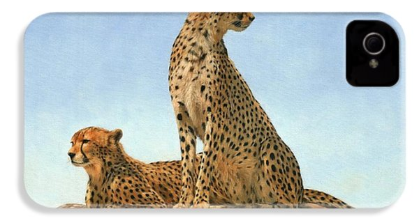 Cheetahs IPhone 4 Case by David Stribbling