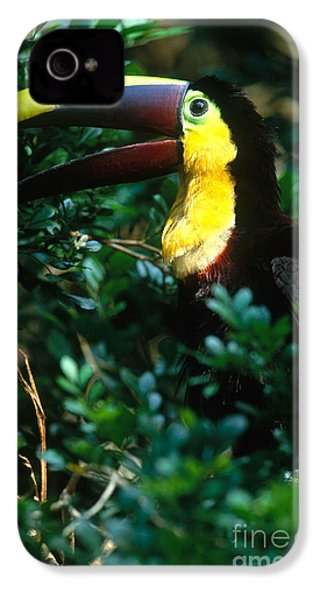 Chestnut-mandibled Toucan IPhone 4 Case by Art Wolfe