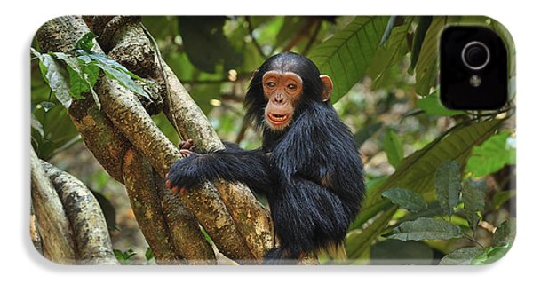Chimpanzee Baby On Liana Gombe Stream IPhone 4 / 4s Case by Thomas Marent