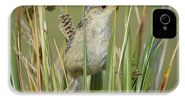Grass Wren IPhone 4 Case by John Shaw