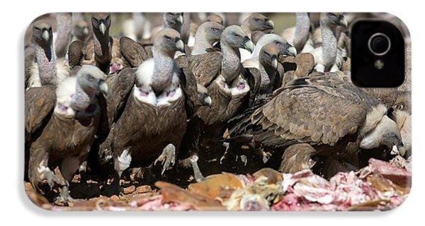 Griffon Vultures Feeding IPhone 4 / 4s Case by Nicolas Reusens
