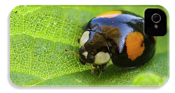 Harlequin Ladybird IPhone 4 / 4s Case by Heath Mcdonald