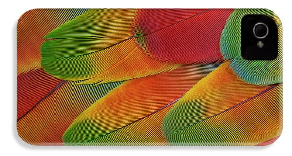 Harlequin Macaw Wing Feather Design IPhone 4 Case by Darrell Gulin