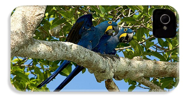 Hyacinth Macaws, Brazil IPhone 4 Case by Gregory G. Dimijian, M.D.