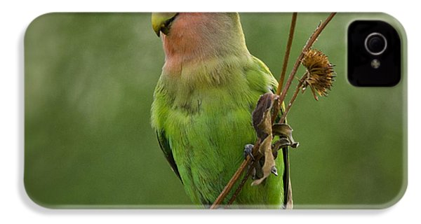 Lovely Little Lovebird  IPhone 4 / 4s Case by Saija  Lehtonen