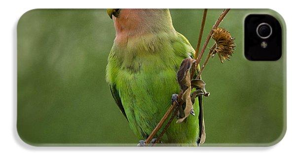Lovely Little Lovebird  IPhone 4 Case by Saija  Lehtonen