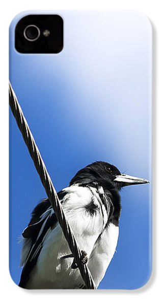 Magpie Up High IPhone 4 / 4s Case by Jorgo Photography - Wall Art Gallery