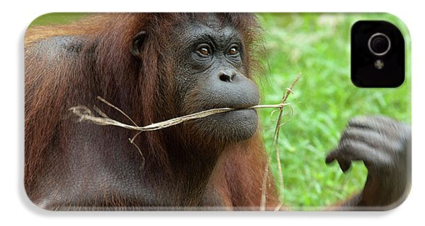 Malaysia, Borneo, Sabah, Kota Kinabalu IPhone 4 / 4s Case by Cindy Miller Hopkins