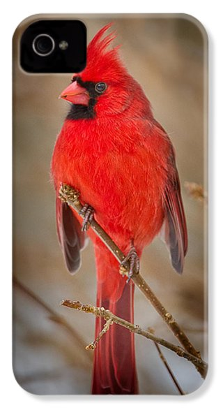 Northern Cardinal IPhone 4 Case by Bill Wakeley