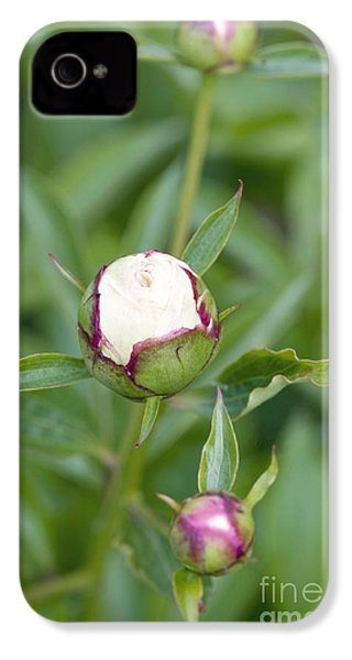 Paeonia Lactiflora Shirley Temple IPhone 4 Case by Jon Stokes