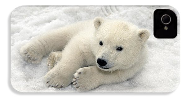 Polar Bear Cub Playing In Snow Alaska IPhone 4 / 4s Case by Mark Newman