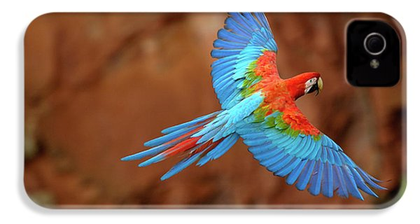 Red And Green Macaw Flying IPhone 4 Case by Pete Oxford