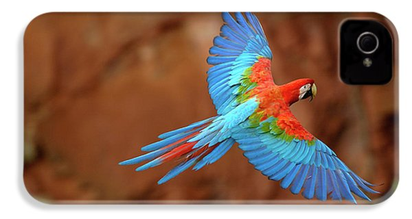 Red And Green Macaw Flying IPhone 4 / 4s Case by Pete Oxford