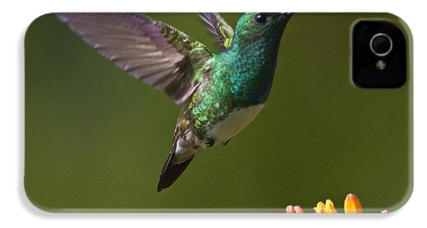 Snowy-bellied Hummingbird IPhone 4 Case by Heiko Koehrer-Wagner