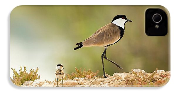 Spur-winged Lapwing Vanellus Spinosus IPhone 4 Case by Photostock-israel