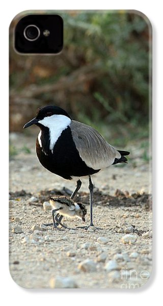 Spur-winged Plover And Chick IPhone 4 Case by PhotoStock-Israel
