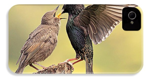 Starlings IPhone 4 / 4s Case by Grant Glendinning